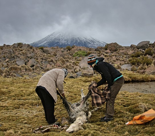 BarfussUmDieWelt-Polare-Schritt-Chile-Parinacotta-Schlachtung-Marta-Kata-Alpaka-barfuß