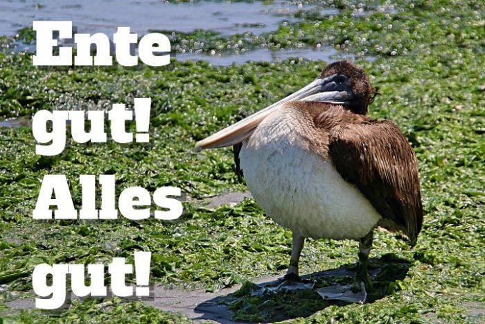 BarfussUmDieWelt-Zwischenschritt-Peru-Pelikan-Ente-gut-alles-gut-barfuß