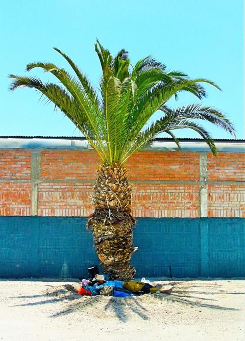 BarfussUmDieWelt-JonathanvonRosenberg-KataleyavonRosenberg-Grundschritt-Chile-Arica-Palme-trampen-barfuß