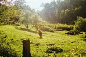 BarfussUmDieWelt-JonathanvonRosenberg-Der-unsbeschwerte-Schritt-Alman-Alpan-Chile-Kuh-barfuß