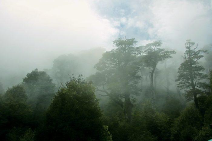 BarfussUmDieWelt-JonathanvonRosenberg-Unbeschwerte-Schritt-Chile-Villarrica-Cani-Nationalpark-Nebel-Bäume-Wald-Wolken-barfuß